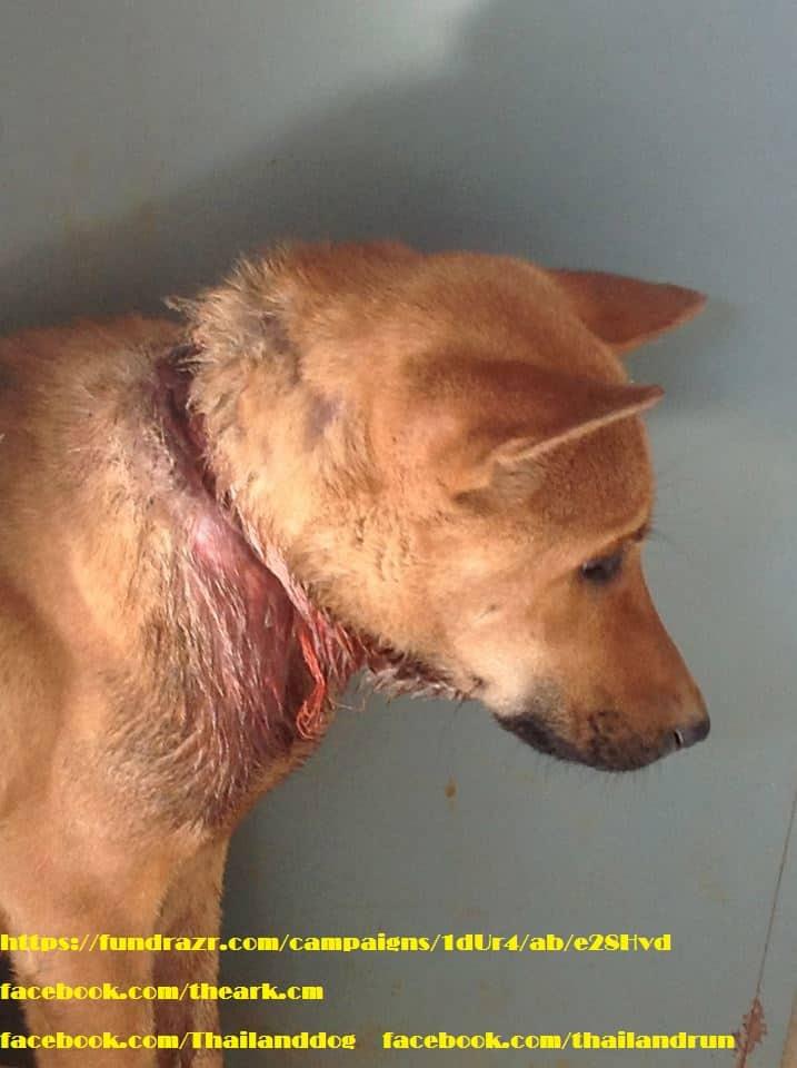 The dog Nong PingKhong almost eaten