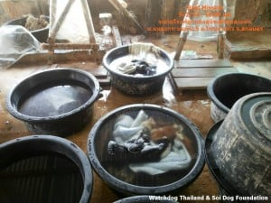 Dog Tannery (1)