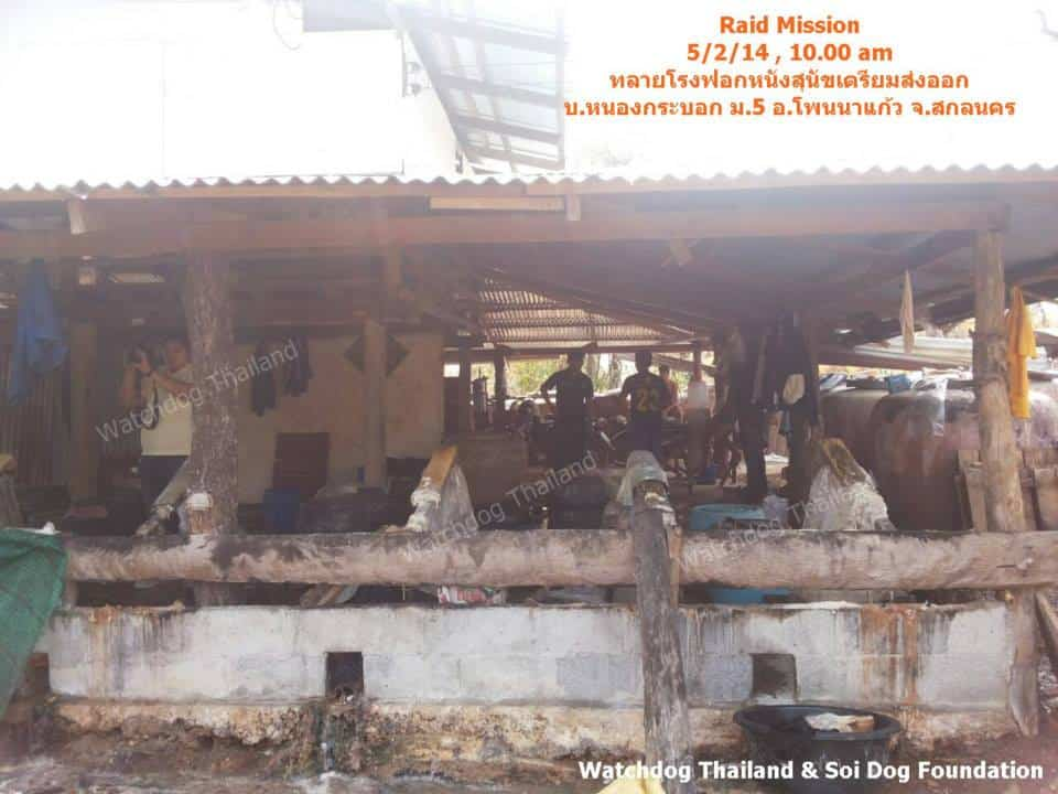 Successful Mission Raid Dog Tannery in ThaRae Sakhonnakhon