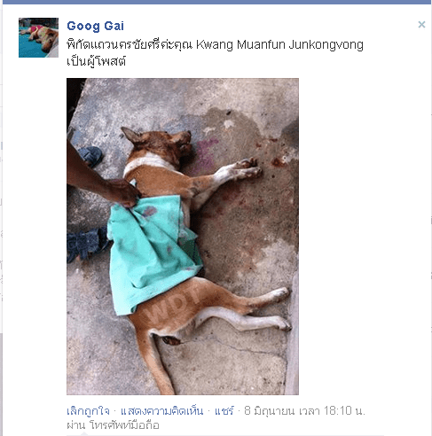Justice for Tao-hu house dog in Thailand