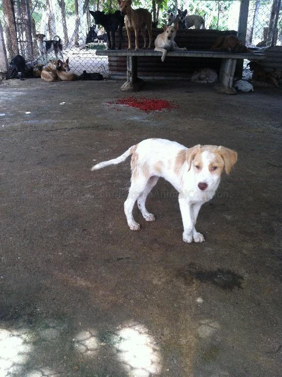 Pattaya Puppies Need Your Help