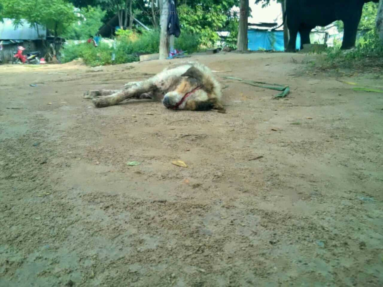 Dog was abused by 30 Cambodian Worker Pattaya Thailand