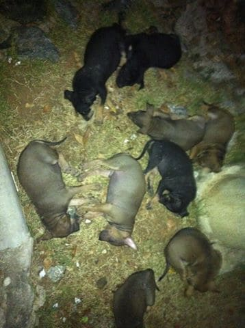 8 Puppies dumped in the Jungle in Pattaya